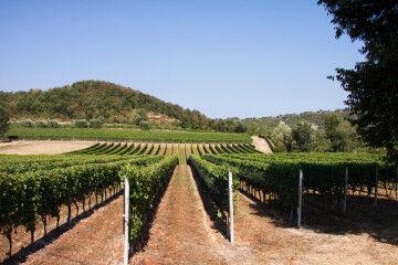 tagAlt.Valtènisi landscape vineyards 4