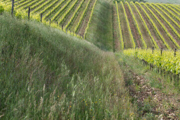 tagAlt.Wild grasses Rocca delle Macìe Sustainable 9