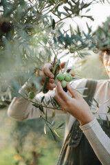tagAlt.Woman pruning Olive tree 6